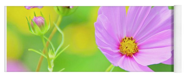 Cosmos Flower In Full Bloom, Bud Yoga Mat