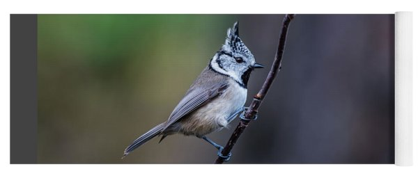 Crested Tit On A Twig Yoga Mat