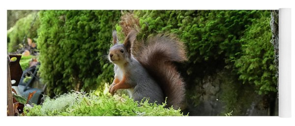 Curious Squirrel Yoga Mat
