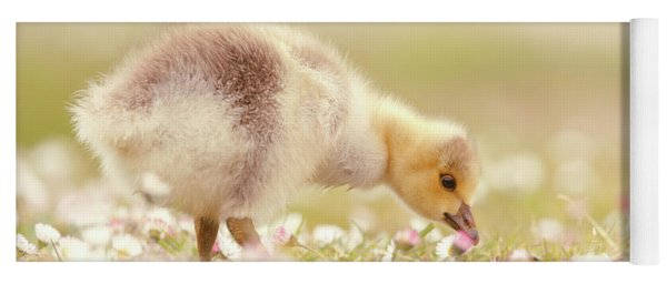 Cute Overload Series - Grazing Gosling Yoga Mat