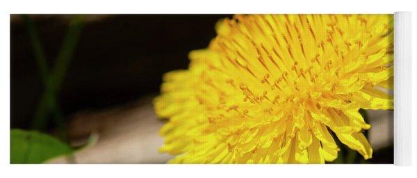Dandelion In Bloom Yoga Mat
