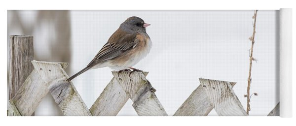 Dark-eyed Junco 2019-1 Yoga Mat