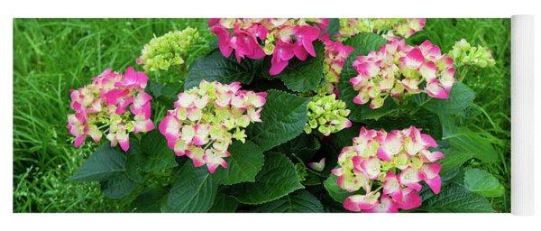 Decorative Floral Pink Hydrangeas C031619 Yoga Mat