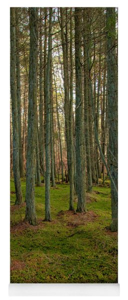 Deep In The Cedar Swamp Yoga Mat