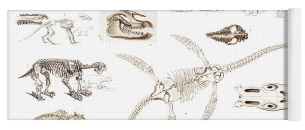 Different Types Of Ancient Fossils Illustrated By Charles Dessalines D' Orbigny  1806-1876 2 Yoga Mat