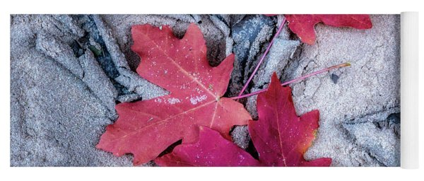 Dry Riverbed With Fall Leaves Yoga Mat