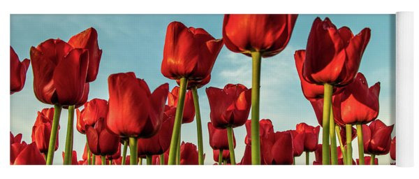 Yoga Mat featuring the photograph Dutch Red Tulip Field. by Anjo Ten Kate