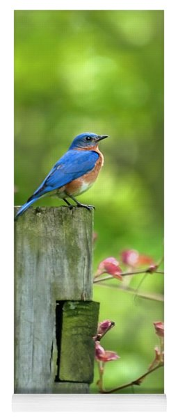Eastern Bluebird Yoga Mat