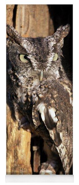 Eastern Screech Owl 92515 Yoga Mat