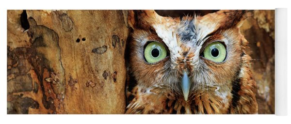 Eastern Screech Owl Perched In A Hole In A Tree Yoga Mat