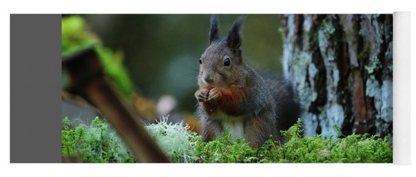 Eating Squirrel Yoga Mat