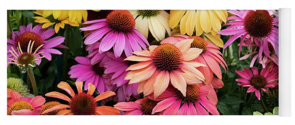 Yoga Mat featuring the photograph Echinacea Cheyenne Spirit Colour by Tim Gainey