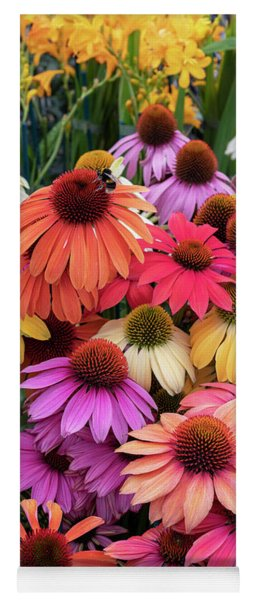 Yoga Mat featuring the photograph Echinacea Color by Tim Gainey