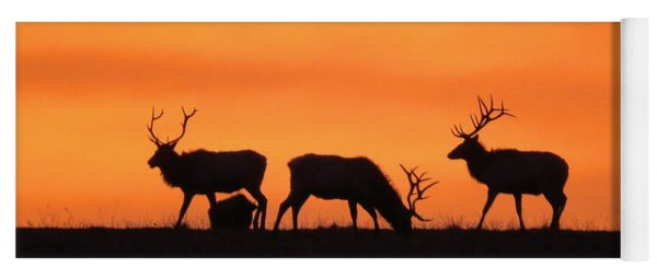 Elk In The Morning Light Yoga Mat