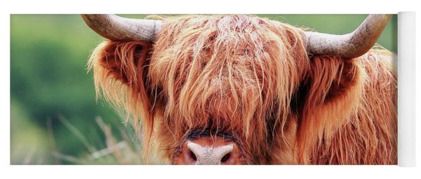 Face-to-face With A Highland Cow Yoga Mat