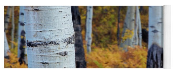 Fall Aspen Forest Yoga Mat
