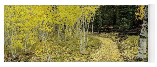 Fall Aspens Along Widforss Trail Grand Canyon Yoga Mat
