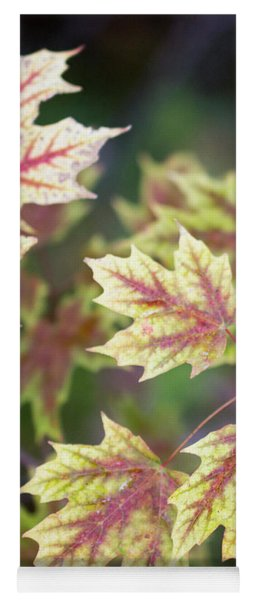 Fall Red And Yellow Leaves 10081501 Yoga Mat
