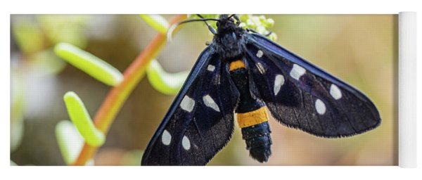 Fegea - Amata Phegea -black Insect With White Spots And Yellow Details Yoga Mat