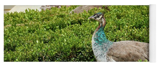 Female Peafowl At The Gardens Of Cecilio Rodriguez In Madrid, Spain Yoga Mat