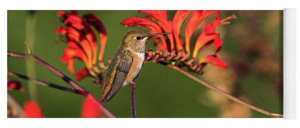Female Rufous Hummingbird At Rest Yoga Mat