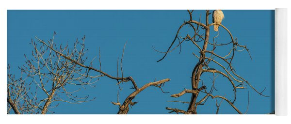 Yoga Mat featuring the photograph Ferrunginous Hawk In Tree by Jon Burch Photography