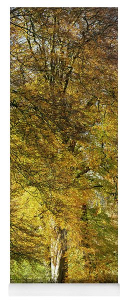 Yoga Mat featuring the photograph Fiery Autumn Beech by Tim Gainey