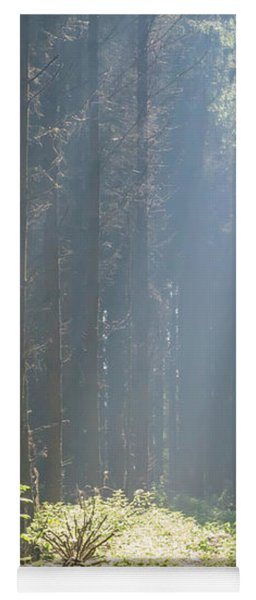 Yoga Mat featuring the photograph Forrest And Sun by Anjo Ten Kate