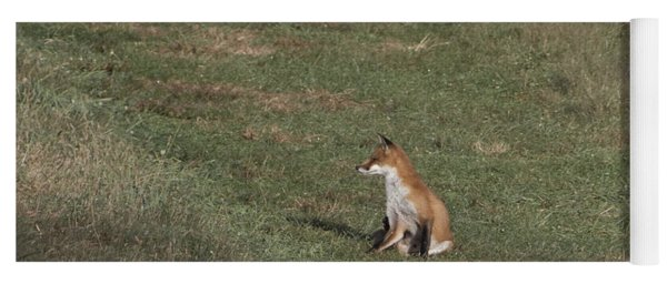 Fox Bsking In The Sun 1 Yoga Mat