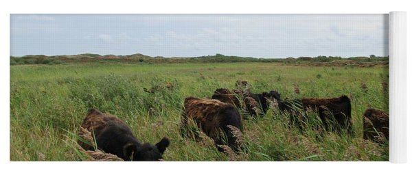 Galloway Cows On Texel North Holland Yoga Mat