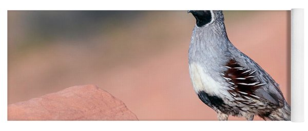 Gambels Quail Two Yoga Mat