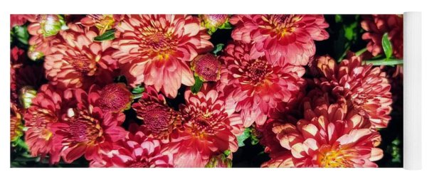 Yoga Mat featuring the photograph Garnet Fall Mums by Rachel Hannah