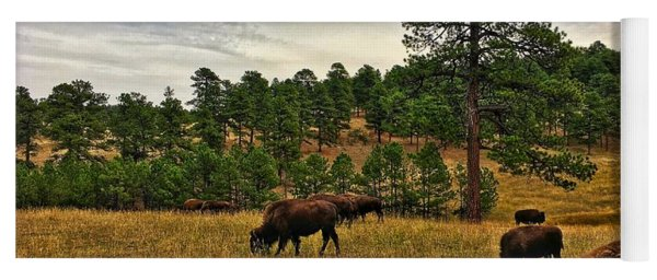 Yoga Mat featuring the photograph Genesee Bison Herd by Dan Miller