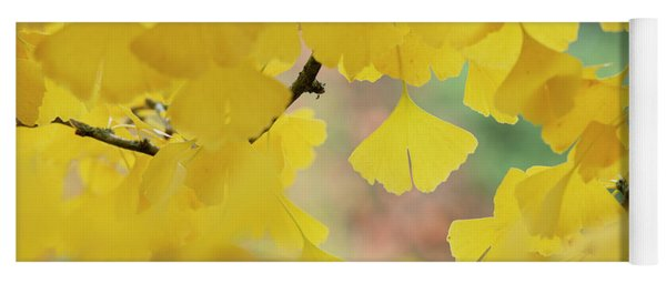 Yoga Mat featuring the photograph Ginkgo Biloba Tremonia Leaves In Autumn by Tim Gainey