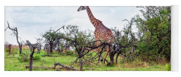 Yoga Mat featuring the photograph Giraffe Landscape by Kay Brewer