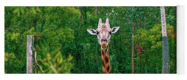 Giraffe Looking For Food During The Daytime. Yoga Mat