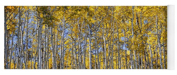 Golden Aspen Grove Yoga Mat