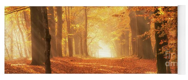 Yoga Mat featuring the photograph Golden Forest In Fall Season by IPics Photography