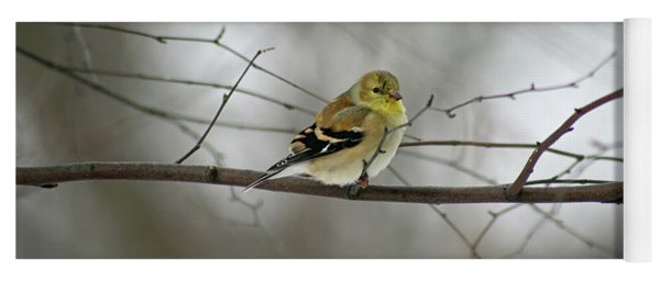 Goldfinch In Winter Looking At You Yoga Mat