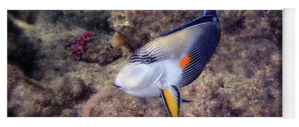 Gorgeous Red Sea Sohal Surgeonfish  Yoga Mat