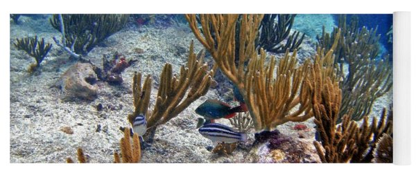 Gorgonian Parrotfish Yoga Mat
