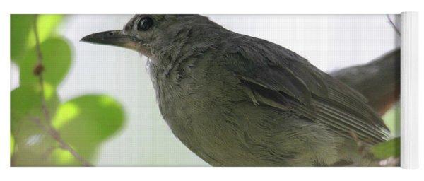 Gray Catbird Yoga Mat