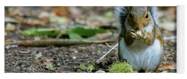 Yoga Mat featuring the photograph Gray Squirrel Stood Upright Eating A Nut by Scott Lyons