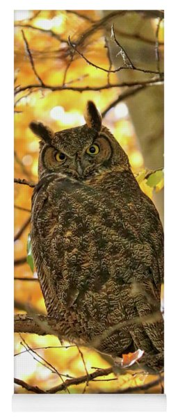 Great Horned Owl In Autumn Tree Yoga Mat