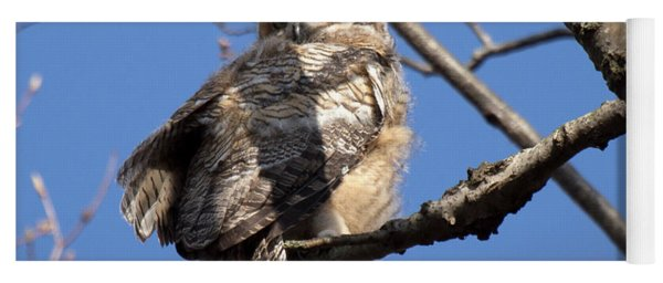 Great Horned Owlet 42915 Yoga Mat