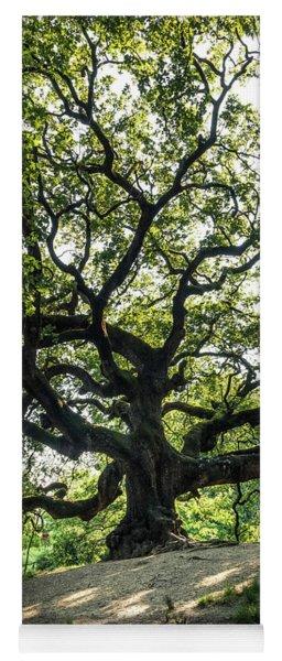 Great Oak - The Great Oak In Montecarlo Near Lucca, Tuscany, Italy Yoga Mat