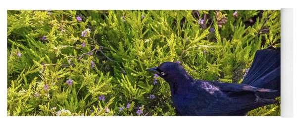 Great-tailed Grackle In Flowers Yoga Mat