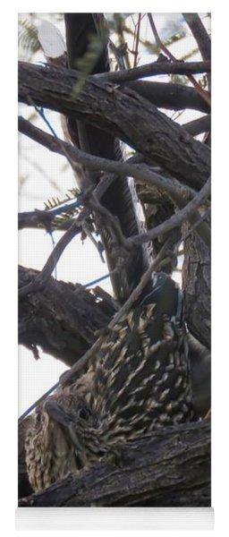 Greater Roadrunner Nesting In Mesquite Tree Yoga Mat