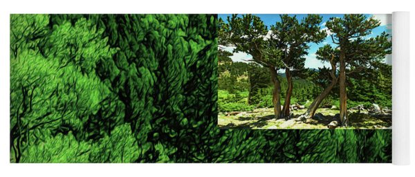 Yoga Mat featuring the photograph Green As Ever Forest by Mike Braun