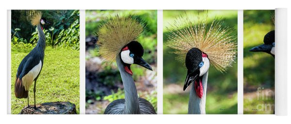 Grey Crowned Crane Gulf Shores Al Collage 1 Yoga Mat
